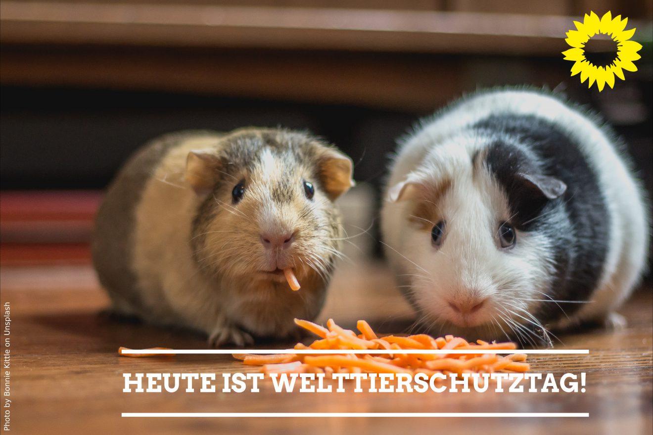 Am 4. Oktober ist Welttierschutztag