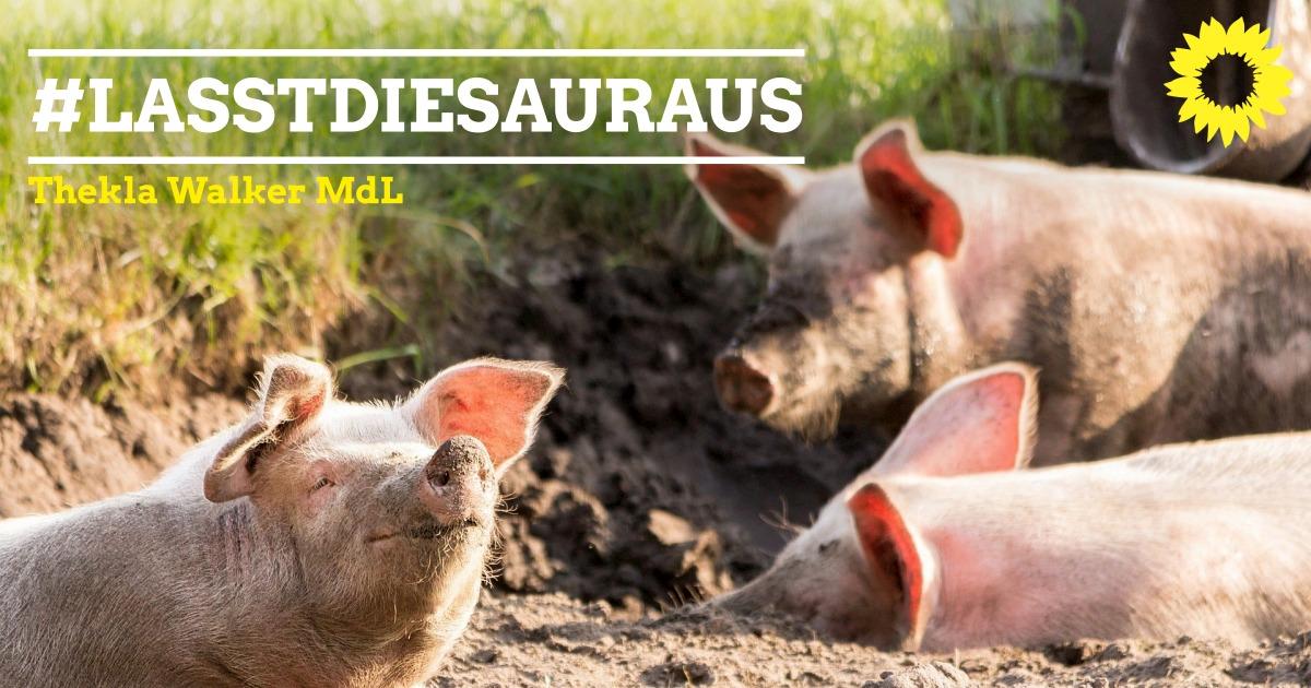 Stellungnahme zur abgesagten Diskussion um eine Änderung der Tierschutz-Nutztierhaltungsverordnung im Bundesrat